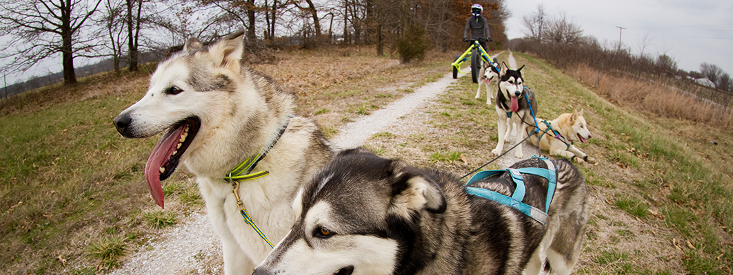 Mush! Missouri Southern Grad Forges a Path in Competitive Dogsledding