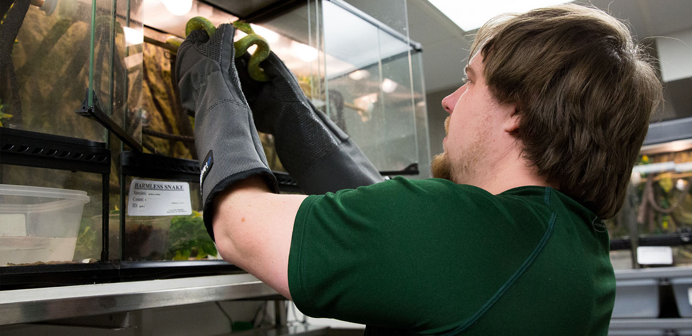Student researchers use reptile lab to contribute to understanding of snakes